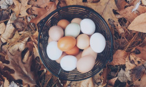 Bourn-Hall-Fertility-Awareness-Week-egg-production
