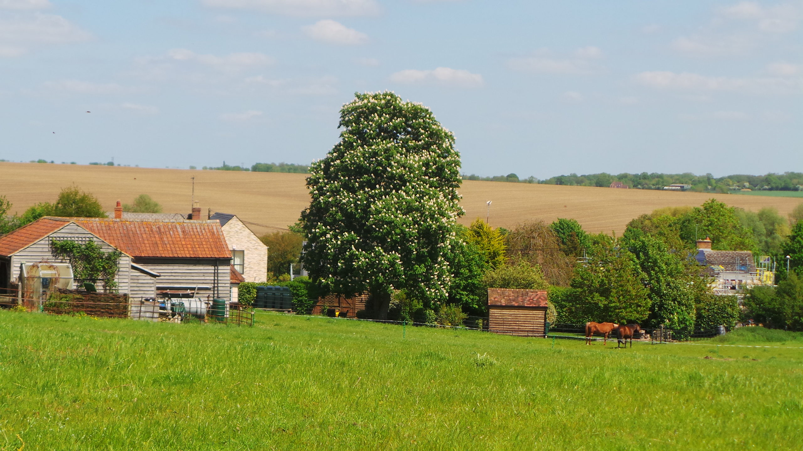 A view across Bourn
