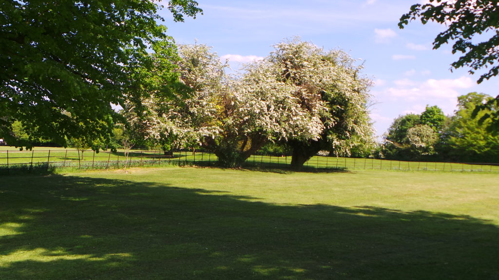 Looking across the Bourn Hall grounds