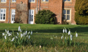 Snowdrops at Bourn Hall IVF pregnancy rates